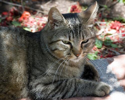 Una empresa japonesa adopta gatos haciendo felices a sus empleados