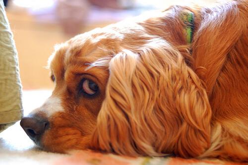 ¿Saben los perros distinguir nuestros enfados?