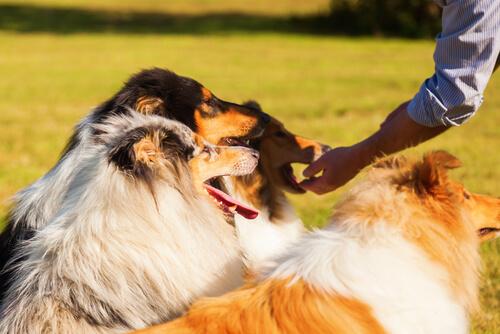 ¿Con qué frecuencia debe comer tu perro?