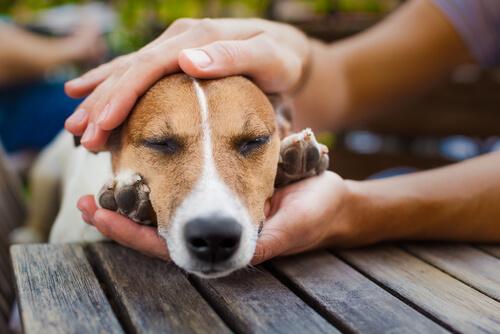 Los perros nos regalan su corazón