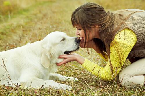 perro encuentra hogar