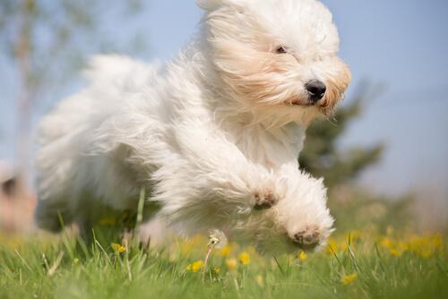 cachorro solta mais pelo
