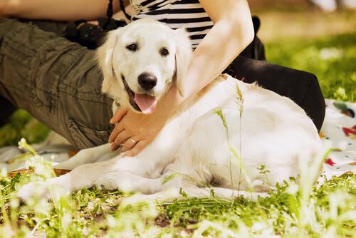 perro trae felicidad