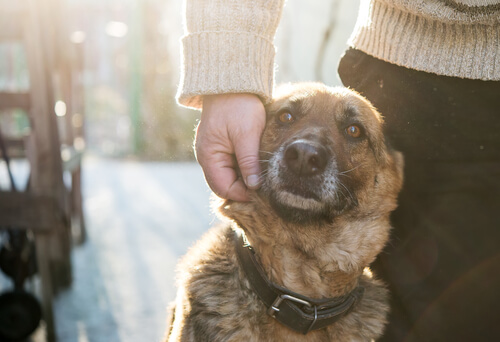 cachorro e pessoa