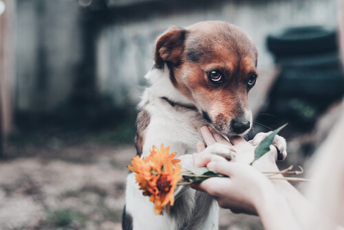 perros con miedo