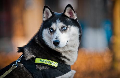 perros policia