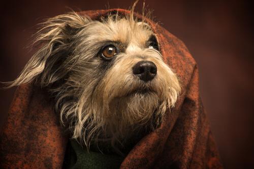 Los cuidados inapropiados de la piel de las mascotas