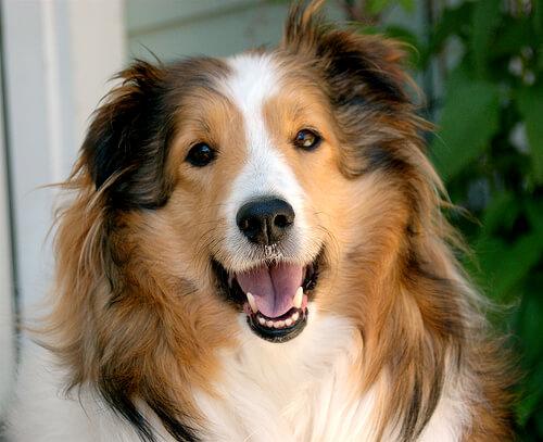 Los perros saben reír
