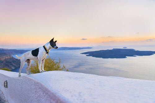 El turismo salvaje daña hasta 500.000 animales al año
