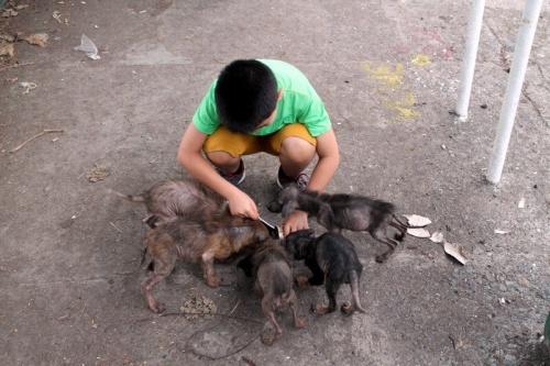 Un niño filipino cumple su sueño y crea un albergue animal