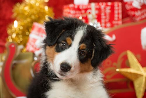 cachorro en navidad
