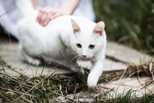 5 razones para enamorarse de un gato