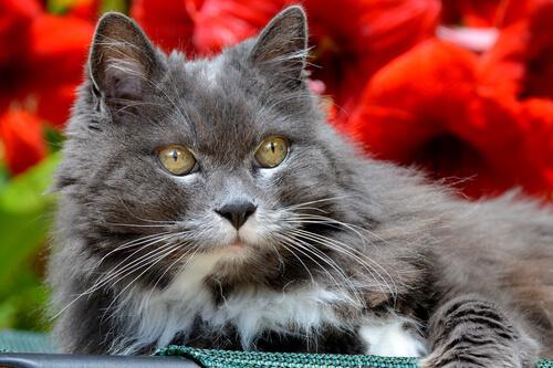 gato idoso