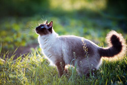 Cosas que vale la pena saber sobre los gatos