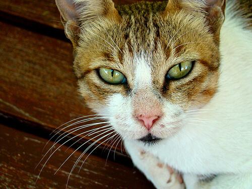 Como ayudar a un gato en duelo