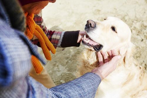 hombre acariciando perro