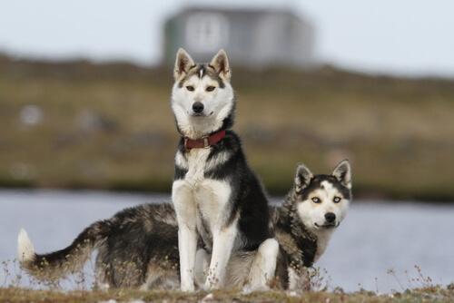 4 razas de perros que tienen mucha salud