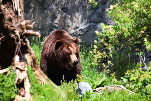 oso en la selva