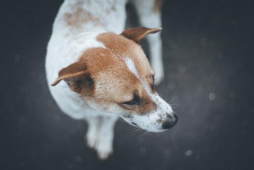 Rescatan a un perro desnutrido mientras su dueña estaba de viaje
