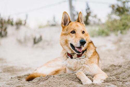La sorprendente historia de Arthur, el perro atleta y su equipo
