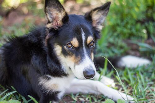 El perro sin nombre y su trágica historia
