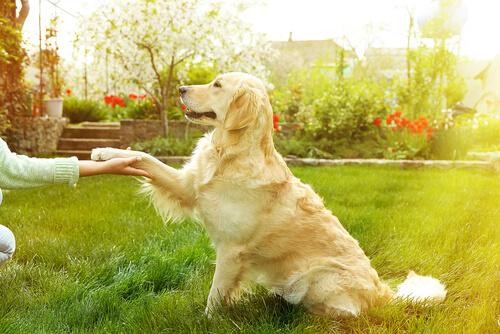 perro da la pata a su dueño