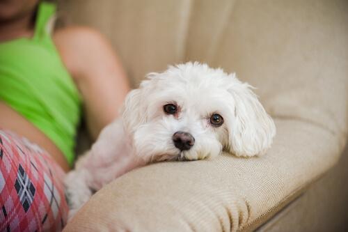 Dormir con tu mascota te ayuda a tener mejor descanso