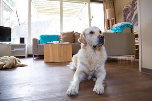 Consejos para mantener la casa limpia teniendo un perro