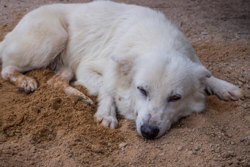 Madrid endurece las penas por maltrato animal