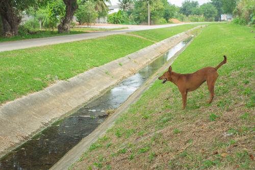 perro en un canal