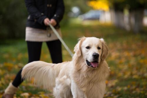 El comportamiento de tu perro depende de su tamaño