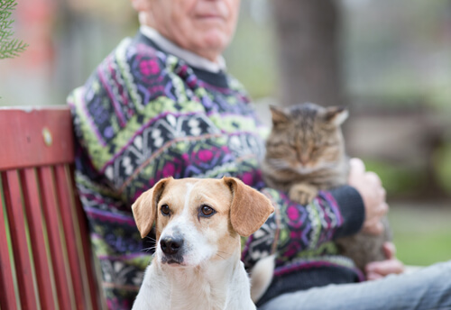 cachorro e gato com pessoa mais velha
