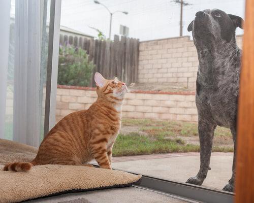 perro y gato en la puert
