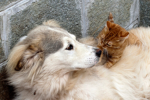 ¿Tu mascota necesita terapia?