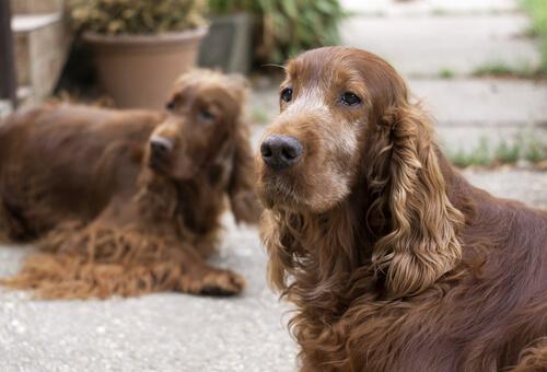 ¿Cómo ayudar a los perros a soportar la vejez?