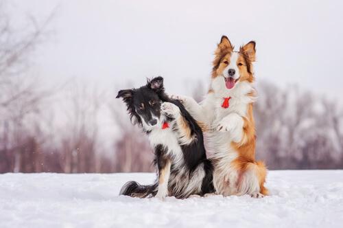 perros en el frio