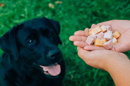 persona da de comer a perro