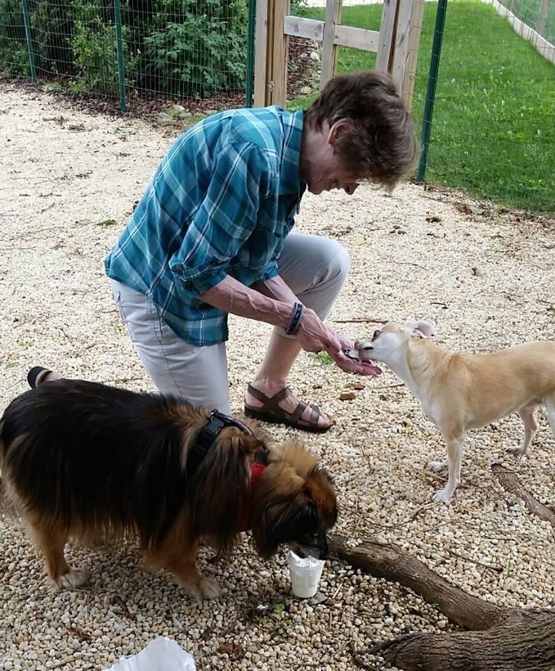 Hogar para perros y ancianos