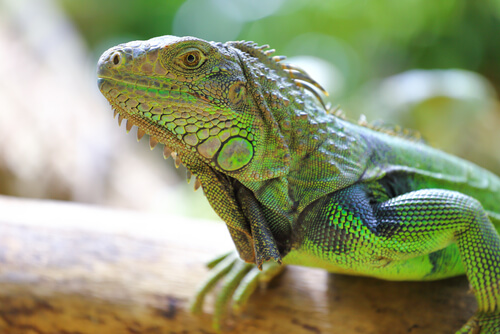 Animales exoticos: reptiles