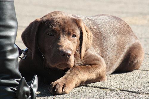 Enséñale a tu perro a comportarse bien en las terrazas