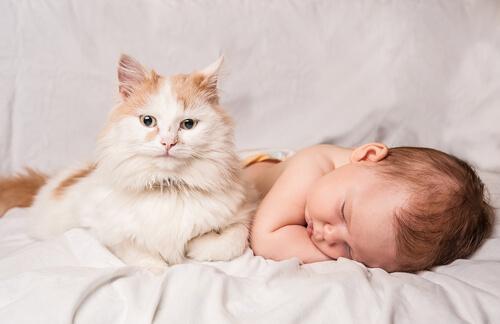 gato y bebé durmiendo