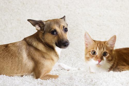Etología animal: ¿qué es?