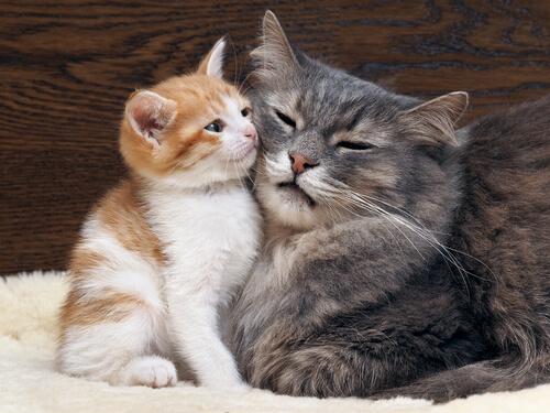10 Muestras De Amor Gatuno Mis Animales
