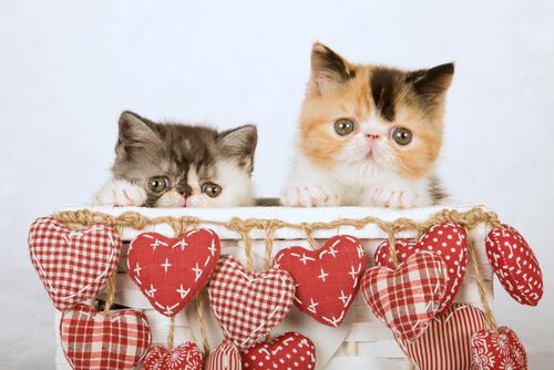 gatos en caja
