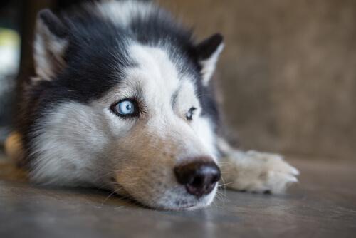 mirada perro