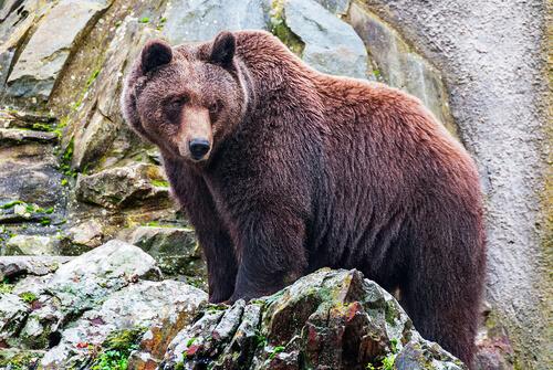 La historia de una bonita amistad entre un lobo y un oso