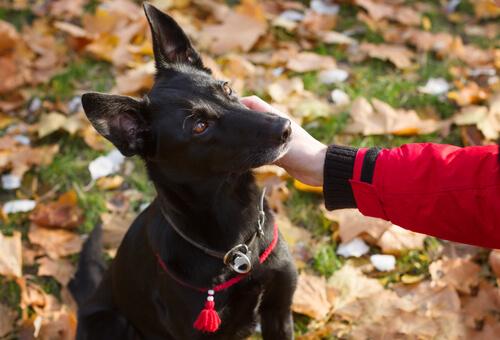 perra negra recorre mas de 300 kilometros