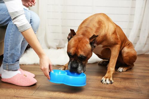 ¿Cómo saber si mi perro tiene diabetes?