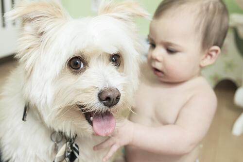 Hazte un regalo: incluye un perro en la vida de tu bebé