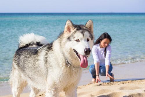 Vete de vacaciones con tu mascota